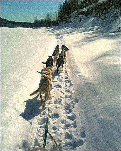 Dog team on the Susitna river