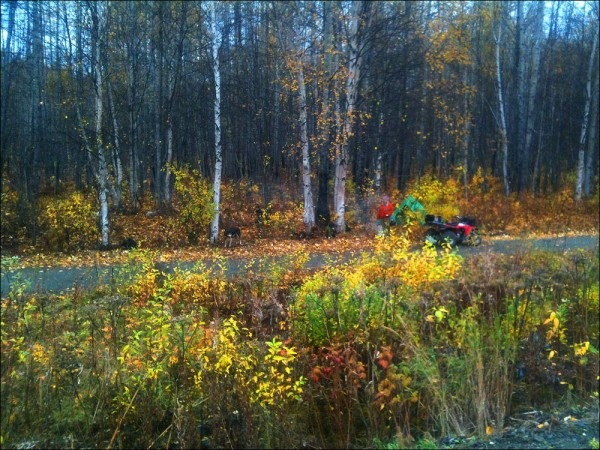 Camped beside the chase trail, Talkeetna Alaska