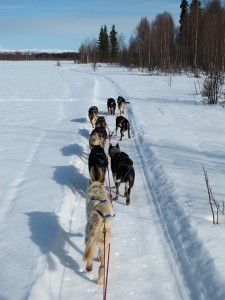 Dog Sledding in Talkeetna Alaska